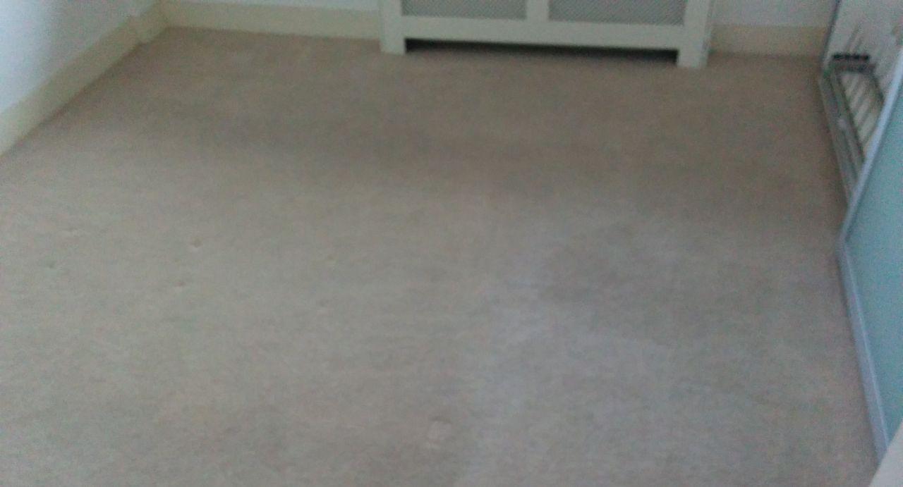 Holland Park clean a carpet W11